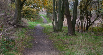 Guided walks and places to see on Mitcham Common
