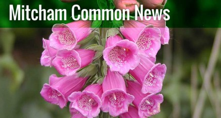 Browse the Mitcham Common news