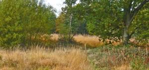 Wet acid grassland