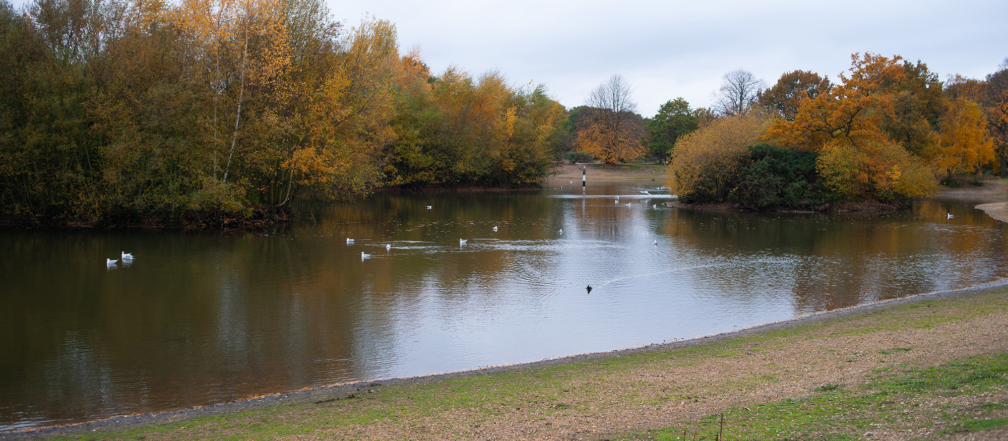 Seven Islands Pond Autumn 2018