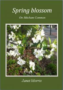 spring blossom cover